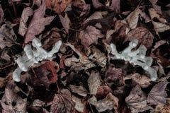 Armi dello scheletro che raggiungono fuori dalle foglie di caduta Immagini Stock