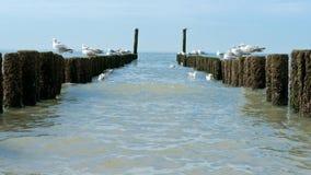 Armi in legno i frangiflutti sulla spiaggia al Mare del Nord Fotografie Stock Libere da Diritti