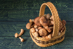 Armillaria mellea or honey fungus in the basket of birch bark Stock Images