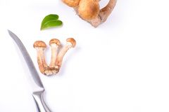 Armillaria mellea and knife Royalty Free Stock Image