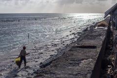 Armodbykvinnan väljer upp havsväxt längs stranden royaltyfria bilder