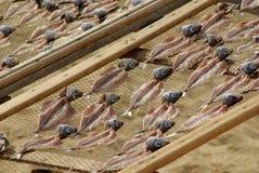 Armoires de séchage de poissons Image libre de droits