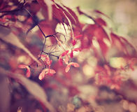 Armonía rosada del color Fotos de archivo