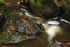 Armonia della foresta Fotografia Stock