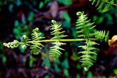 Armonic paprociowy liść zdjęcia stock