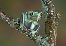 Armored Frog Stock Photos
