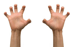 Arms. Two arms on white isolated Royalty Free Stock Photo