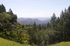 Armstrong Redwoods State Natural Reserve, California. United States - to preserve 805 acres 326 ha of coast redwoods Sequoia sempervirens. The reserve is Royalty Free Stock Photo
