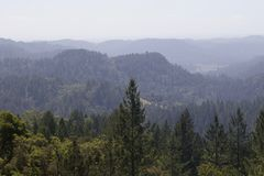 Armstrong Redwoods State Natural Reserve, California. United States - to preserve 805 acres 326 ha of coast redwoods Sequoia sempervirens. The reserve is stock photos