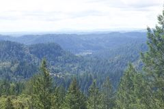 Armstrong Redwoods State Natural Reserve, California,  United States. To preserve 805 acres 326 ha of coast redwoods Sequoia sempervirens. The reserve is Stock Photo