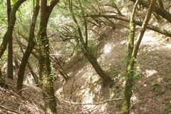 Armstrong Redwoods State Natural Reserve, California,  United States. To preserve 805 acres 326 ha of coast redwoods Sequoia sempervirens. The reserve is Royalty Free Stock Photography