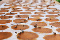 Army Bees Royalty Free Stock Photos