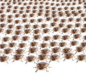 Army of Brown Stink Bugs Royalty Free Stock Photography