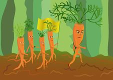 Army of genetically modified carrots Royalty Free Stock Photo