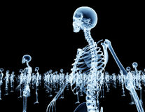 Army of skeletons isolated on black Stock Photography