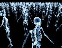 Army of skeletons isolated on black Stock Photos