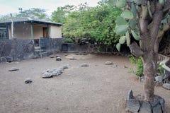 Arnaldo Tupiza Chamaidan, γιγαντιαίο κέντρο αναπαραγωγής Tortoise, νησί Isabela, Galapagos νησιά Στοκ εικόνες με δικαίωμα ελεύθερης χρήσης