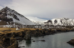 Arnarstapi, Ισλανδία Στοκ εικόνες με δικαίωμα ελεύθερης χρήσης