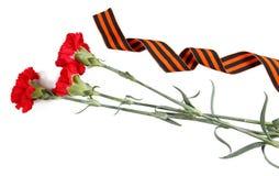 arnations ï ¿ ½ και κορδέλλα του ST George που απομονώνεται στο λευκό Σύμβολα της νίκης στο μεγάλο πατριωτικό πόλεμο Στοκ εικόνα με δικαίωμα ελεύθερης χρήσης