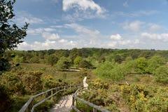 Arne Nature Reserve cerca de Wareham Imagen de archivo