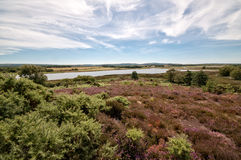 Free Arne Nature Reserve, Dorset, England, UK Stock Photos - 44727593