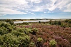 Arne Nature Reserve, Dorset, England, UK. Footpath through Arne RSPB Nature Reserve in Dorset, England Stock Photos