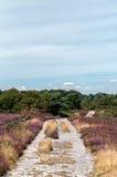 Arne Nature Reserve, Dorset, England, UK. Footpath through Arne RSPB Nature Reserve in Dorset, England Royalty Free Stock Image