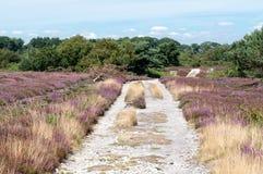 Arne Nature Reserve, Dorset, England, UK. Footpath through Arne RSPB Nature Reserve in Dorset, England Royalty Free Stock Photography