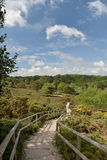 Arne Nature Reserve near Wareham. On Dorset coast Royalty Free Stock Images