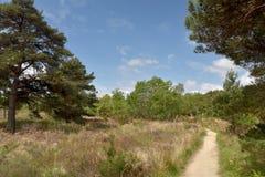 Arne Nature Reserve perto de Wareham fotografia de stock