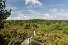 Arne Nature Reserve vicino a Wareham immagine stock