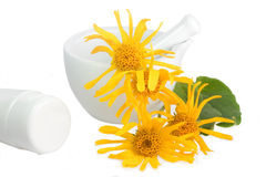 Arnica cream Stock Photos