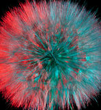 Arnica flower seeds. Close-up of the seeds of an arnica flower lit with red and blue-green Royalty Free Stock Image
