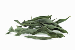 Arnica herb dried leaves Stock Image