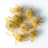 Arnica montana, dried, dry. Nature, remedies, plant Stock Image