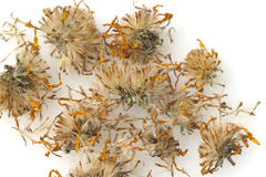 Arnica montana, dried, dry Royalty Free Stock Photography