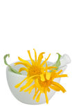 Arnica in a mortar Royalty Free Stock Photos