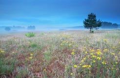 Arnika blommar på kullen i morgon arkivfoto