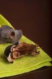 Arnoldii Rafflesia Στοκ φωτογραφία με δικαίωμα ελεύθερης χρήσης