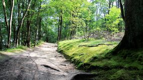 Aromático natural da trilha verde da floresta após a chuva Imagens de Stock