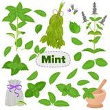 Arom för mentol för sidor för mintkaramellvektorgrönmynta och ny uppsättning för pepparmintörtillustration av växt- bladmat för g stock illustrationer