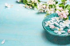 Aroma bowl with water and white blossom flowers on Turquoise blue  shabby chic wooden background. Wellness and spa concept. Spring blossom background Stock Photos