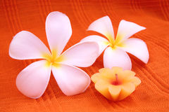 Aroma candle with frangipani Royalty Free Stock Photo