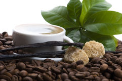 Aroma coffee with vanilla and coffee branch Royalty Free Stock Photos