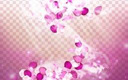 Aroma cor-de-rosa da flor ilustração royalty free