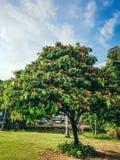Aroma del fiore d'arancio Fotografia Stock Libera da Diritti