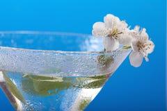 Aroma del fiore di ciliegia Immagini Stock