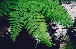 Aroma delle foreste tropicali e dell'umidità dopo la pioggia Fotografia Stock Libera da Diritti