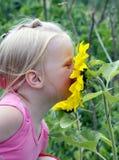 Aroma der Sommersonne Stockfotografie