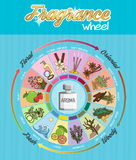 Aroma fragrance guide wheel infographic poster. Aromatic guide wheel for perfume, scent and aroma infographic poster. Oriental, woody, fresh and flower essenses vector illustration
